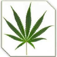 Staatlicher Verkauf von Marihuana in Uruguay – Start: 19. Juli 2017